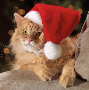 1000 images about all about dad on pinterest cat christmas cards christmas pictures and. Black Bedroom Furniture Sets. Home Design Ideas