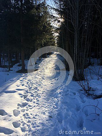 A path into the forest