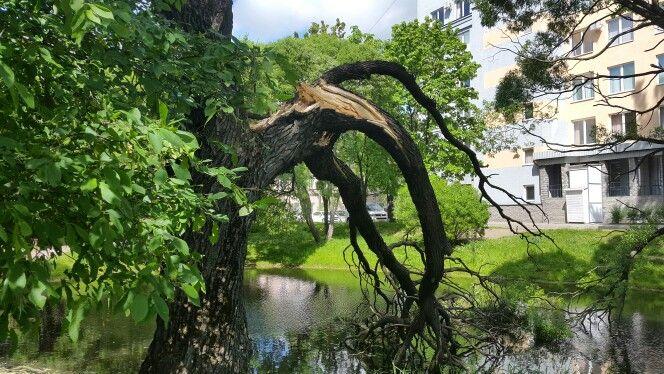 Пионерский сад после грозы.