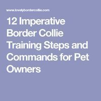 12 Imperative Border Collie Training Steps and Commands for Pet Owners http://puppies.host/Puppies/