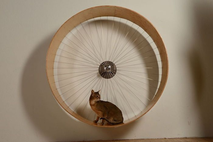 Want to create your own indoor exercise wheel for your feline friend? Check out this brilliant DIY wall mounted cat wheel! http://www.styletails.com/2017/03/06/5-incredible-indoor-exercise-wheels-for-cats/