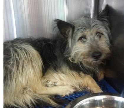 12/15/16 last day of today Animal ID\t34108401 \r\nSpecies\tDog \r\nBreed\tTerrier\/Mix \r\nAge\t1 day \r\nGender\tMale \r\nSize\tMedium \r\nColor\tBlack\/Brown \r\nSite\tCity of El Paso Animal Services \r\nLocation\tSally Port \r\nIntake Date\t12\/1\/2016