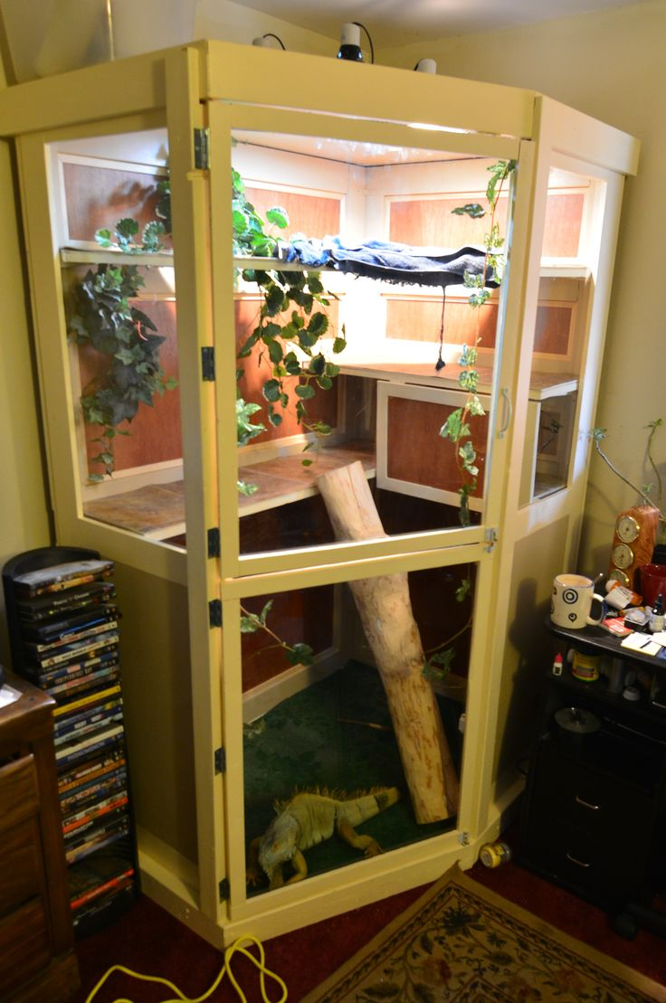 Newly Built Iguana Enclosure
