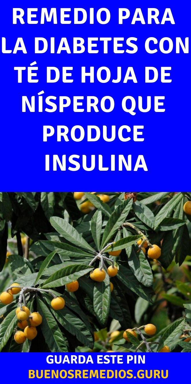 las hojas de níspero sirve para la diabetes