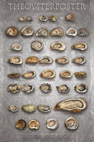 marinelli-the-oyster-poster.