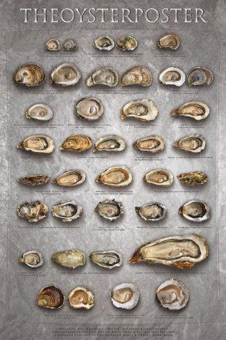 """Oyster Poster  Per prendere spunti sulla """"Verticale di Ostriche"""""""