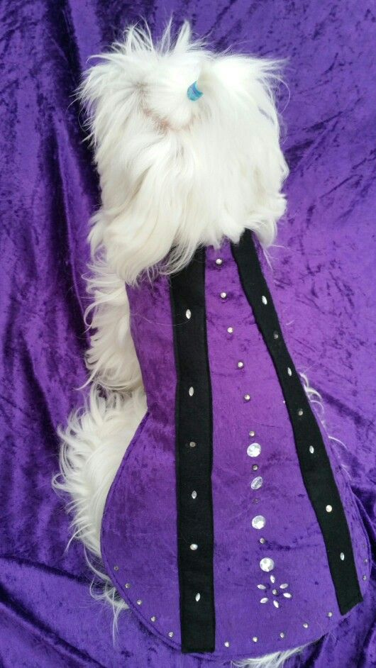 Wizards cape purchasing from www.pixiesposhpets@yahoo.co.uk