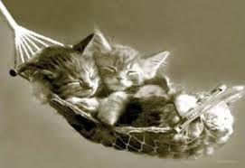 Kuvahaun tulos haulle söpöt kissanpennut