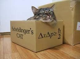 Paradoja de la mecánica cuántica: el gato de Schrodinger