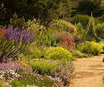 Add Vertical Interest  Be sure to include a few plants with vertical growth to add interest to the landscape. In the section of the garden shown here, upright salvias, penstemons, and verbascum, along with spiky yucca foliage, contrast beautifully with the myriad of mounding plants.