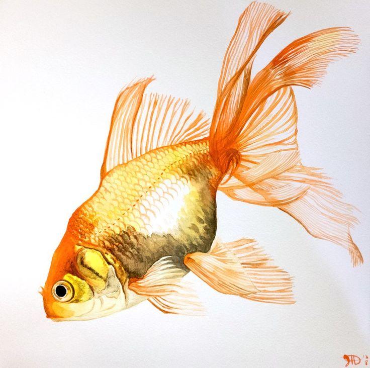 goldfish fancy fins watercolor by arjomar
