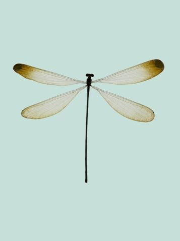 libelle animals pinterest dragonflies and tattoo. Black Bedroom Furniture Sets. Home Design Ideas