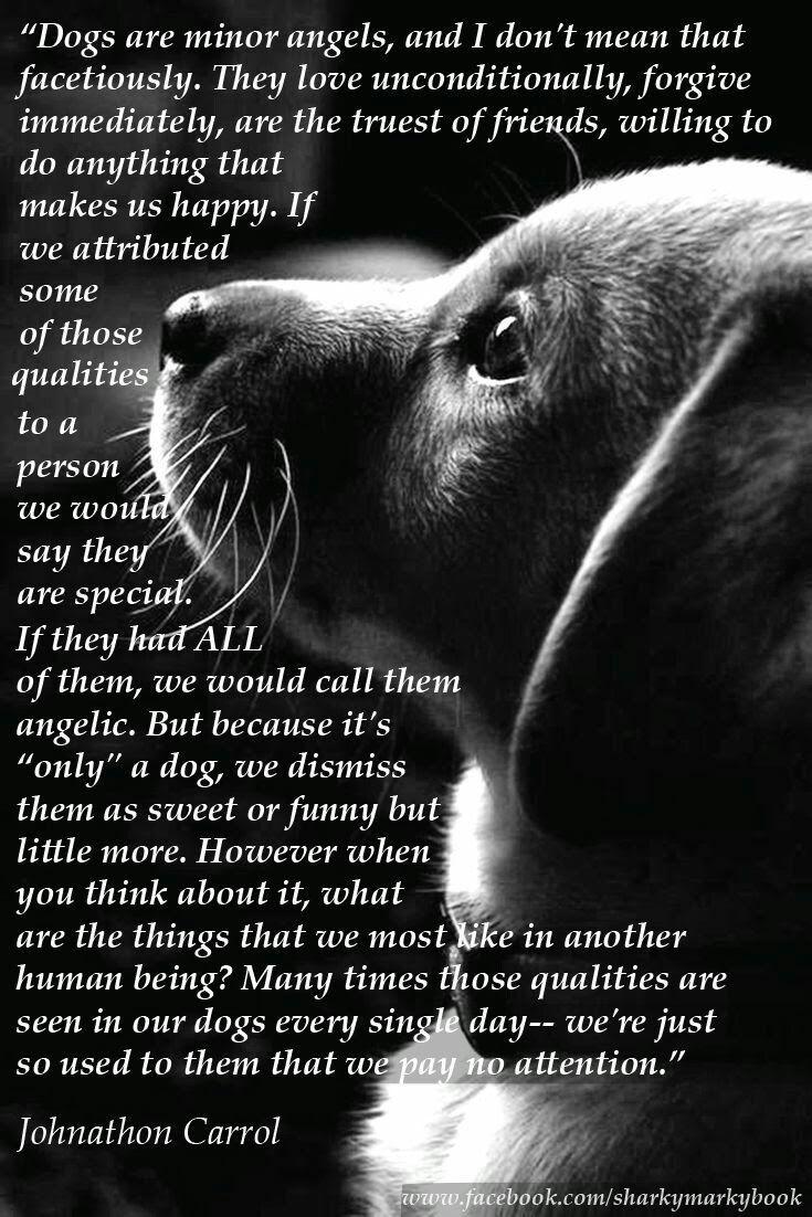 Photo Dachshunddiy Dog Quotes Dog Poems Dogs