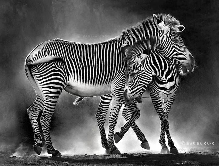 Marina Cano's Stunning Photos Capture the Majestic Beauty of Wildlife - My Modern Met
