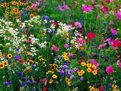 All about summer wildflower meadows. Seed bombers..check it out!