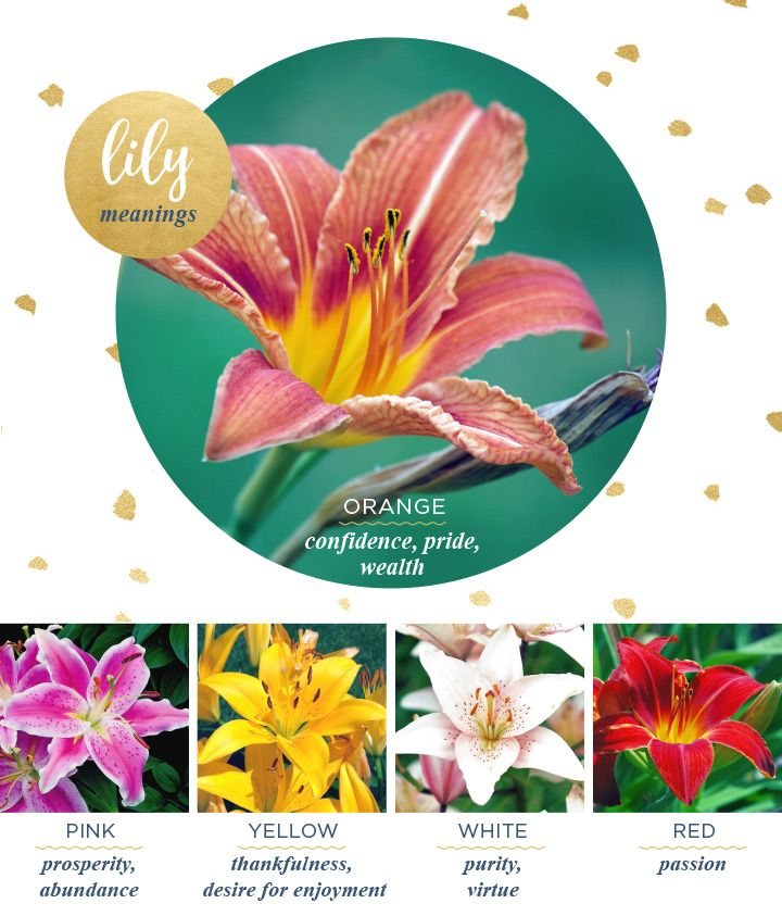 what does the flower lily mean