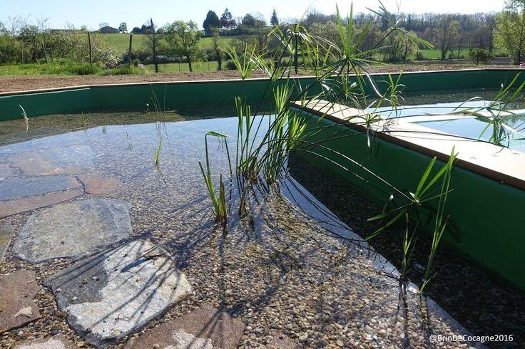 Papyrus - piscine écologique - Chambre d'hôtes écologique de charme dans le Tarn près d'Albi - Brin de Cocagne