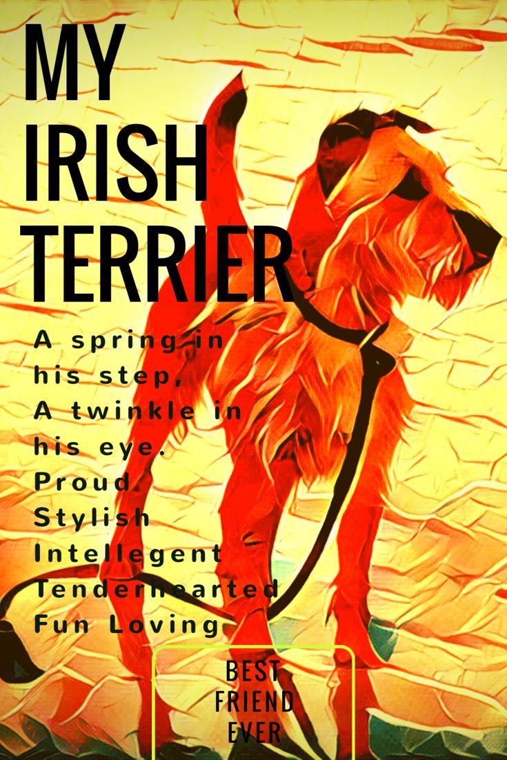 Irish Terriers ☘