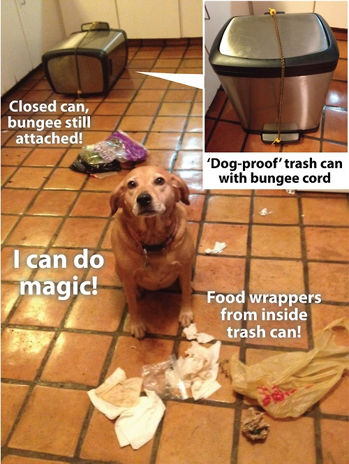 Mom, while you were gone I came up with a magic trick…but I'm not tellin' nobody how I did it.