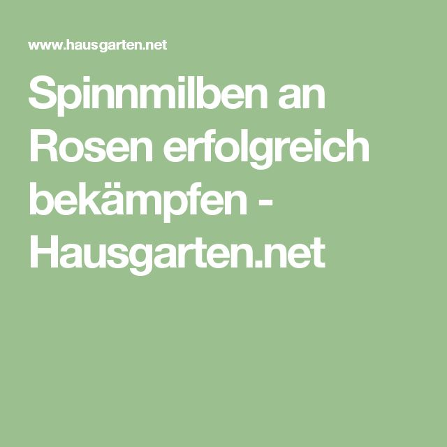 Spinnmilben an Rosen erfolgreich bekämpfen - Hausgarten.net