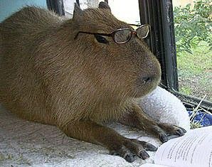 Accessing application session in capybara | Ruby On Rails Blog by ...