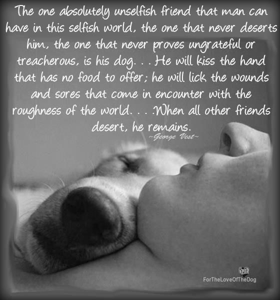 The one absolutely unselfish friend that man can have in this selfish world. The one that never deserts him, the one that never proves ungrateful or treacherous, is his dog...He will kiss the hand that has no food to offer, he will lick the wounds and sores that come in encounter with the roughness of the world.... When all other friends desert, he remains. George West