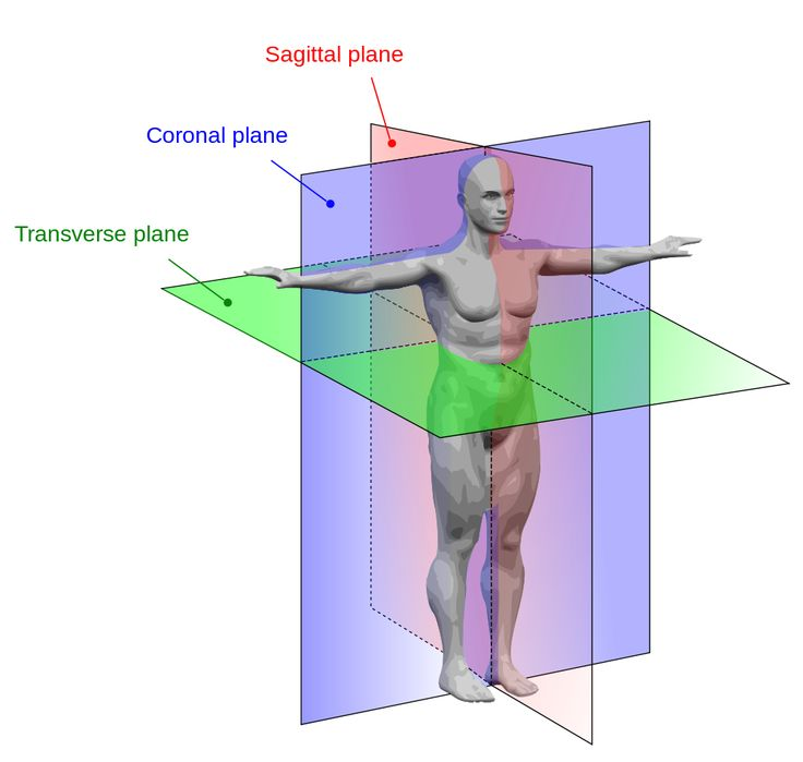 The language of anatomy is called the mid saggital plane, coronal plane and the transverse plane.