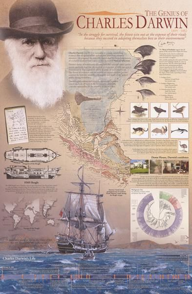 A great infographic poster of Charles Darwin's Theory of Evolution! Perfect for Biology class and history-lovers. Fully licensed. Ships fast. 24x36 inches. Need