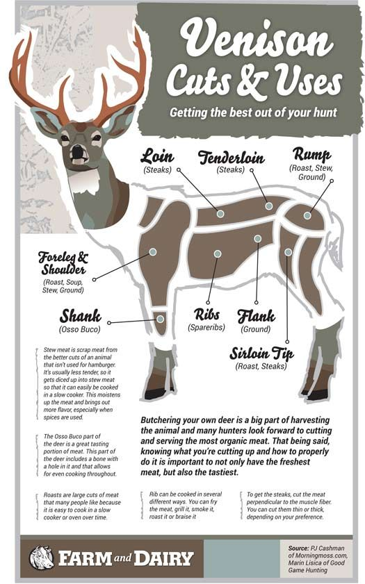 Venison cuts and makes use of (Infographic)
