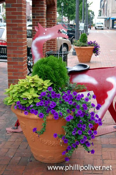 500 best images about container gardening on pinterest for Good filler plants for landscaping