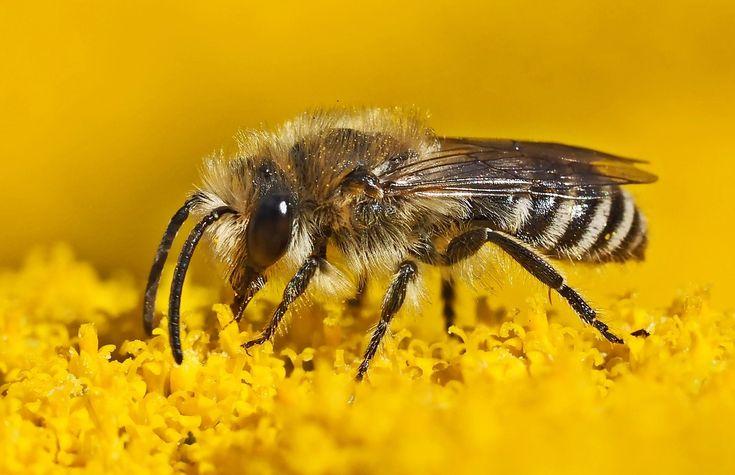 ¡Hola amig@s de Farmacia Mustieles! Os hemos preparado un post en el que hablamos de unas de las protagonistas de esta primavera: las #abejas. Estos pequeños insectos los podemos encontrar volando a nuestro alrededor y, si nos acercamos demasiado, puede que nos piquen. Os hablamos más de ello en nuestro último post http://farmaciamustieles.com/blog/las-picaduras-de-abeja-en-primavera/