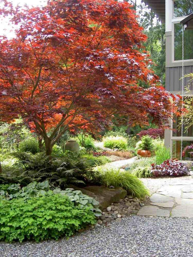 érable du Japon, herbe du apon et fougère dans le jardin