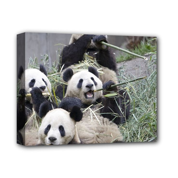 """Happ+Family+Panda+Eating+Bamboo+Deluxe+Canvas+14""""+x+11""""+(Stretched)"""