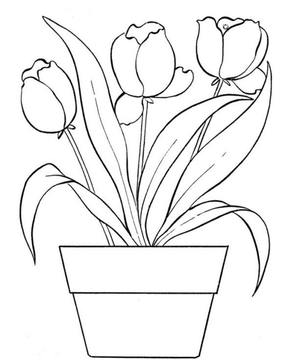 Beautiful Tulip Coloring Pages Collection Free Coloring Sheets Printable Flower Coloring Pages Flower Coloring Pages Coloring Pages
