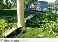 Lightning last night blew the bark off this tree ~ Mother Nature's version of 'whacked'.