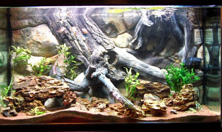 Heres the best looking 3d aquarium background amazon for Fish tank decorations amazon