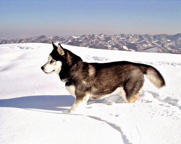 Imagenes de perro,images of dogs,perros bonitos,perros graciosos,cute dogs, funny dogs,fotografias de animales,photographs of animals,