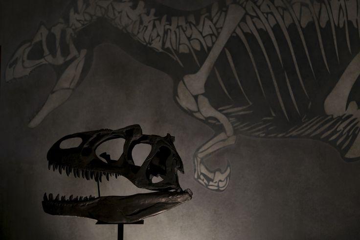 Allosaurus: Um Dinossáurio, dois continentes Uma exposição que nos transporta para uma viagem ao tempo do Allosaurus fragilis.  museUnum@Museu Nacional de História Natural e da Ciência