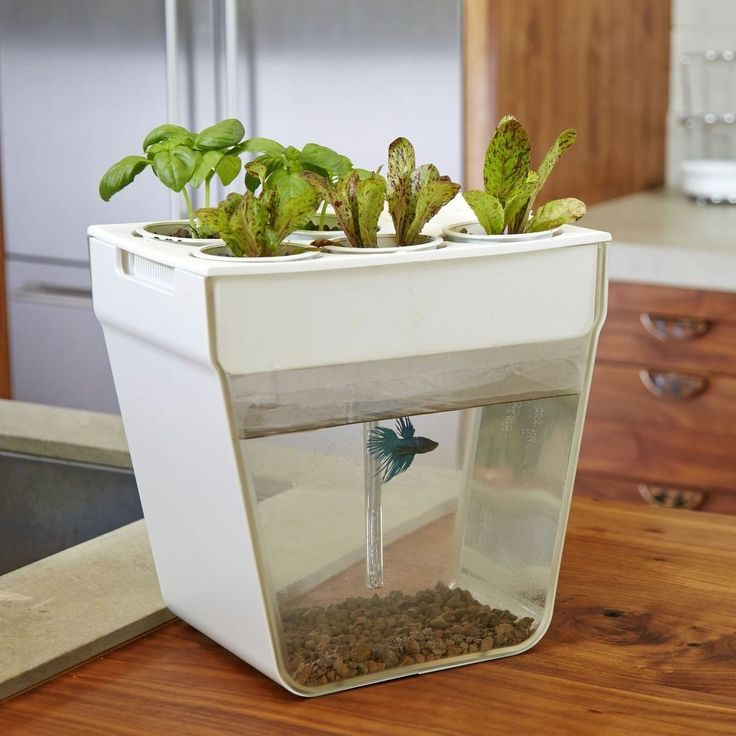 Aquafarm at home aquaponics kit living off grid pinterest for Fish tank herb garden