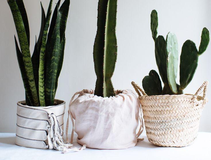 How Often Should I Water My Plants? | Collective Gen ...