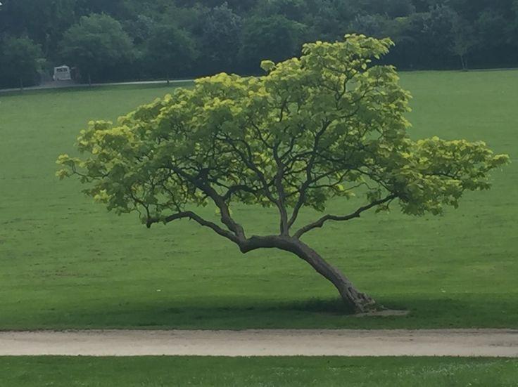 The most vivid green tree at Crystal Palace Park, I love natural wonders!