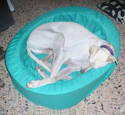 Como hacer una cama para un perro diy inspiraci n - Como hacer camitas para perros ...