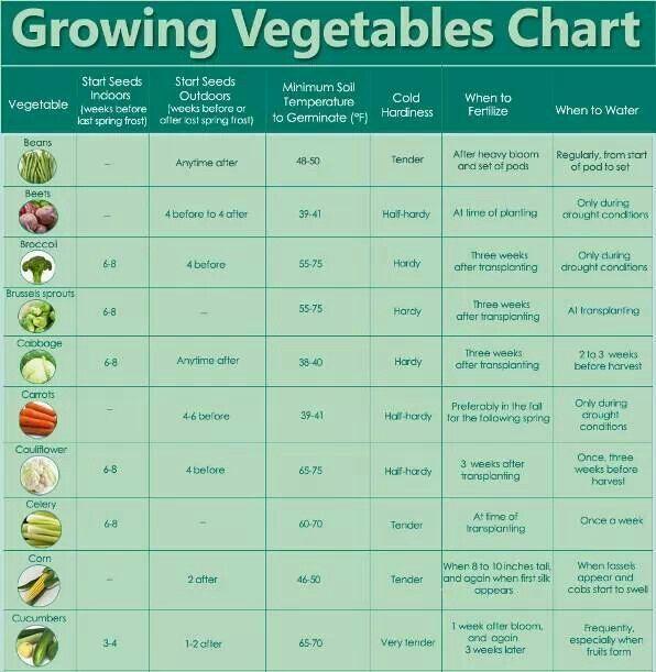 Seed Starting Chart Garden Fun Pinterest