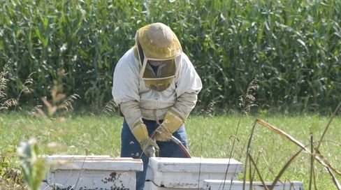 Center for Food Safety | News Room | Honey Bee Colonies See Record Losses of 44% during Past Year