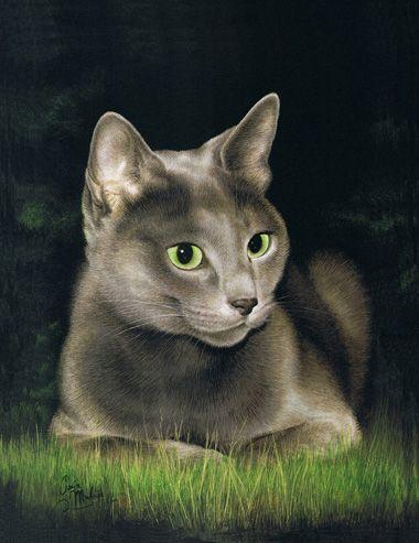 schilderij kat : russisch blauw