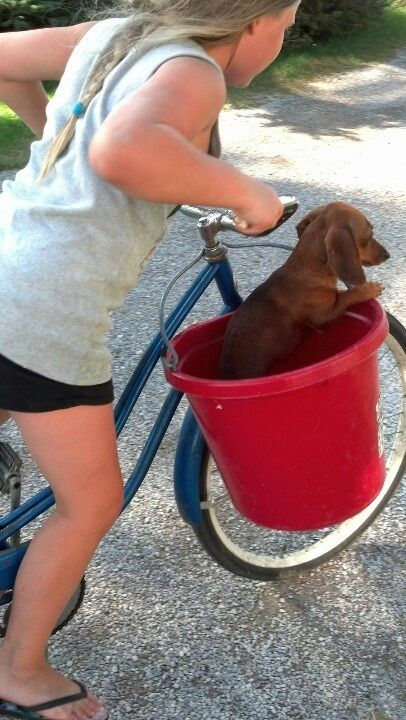 Puppy Taxi
