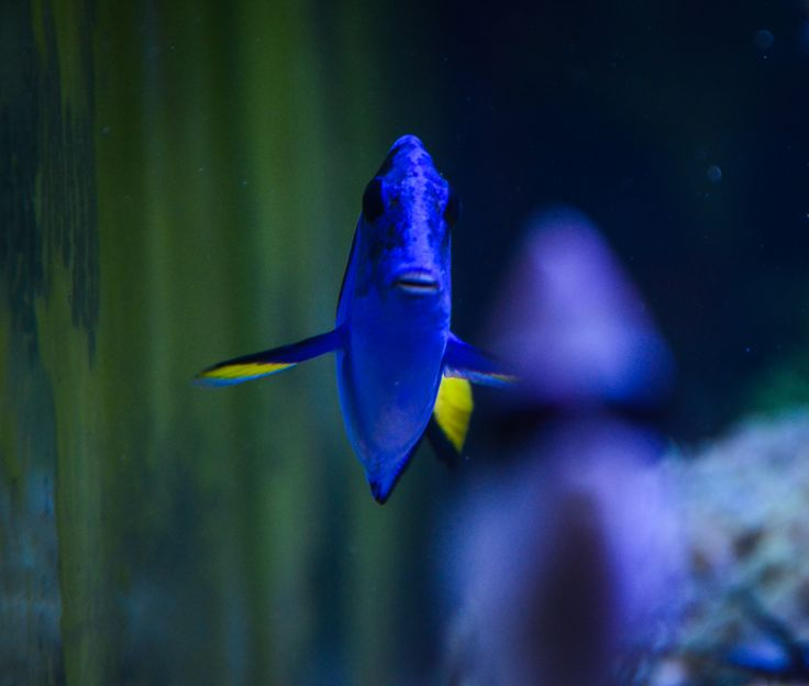 The Penn State Aquarium is a the gift from the class of 1999 located in the Hub-Robeson Center. The coral reef aquarium not only serves as a decorative display but also as a living laboratory for teaching environmental science, biology, geology, and chemistry to students.