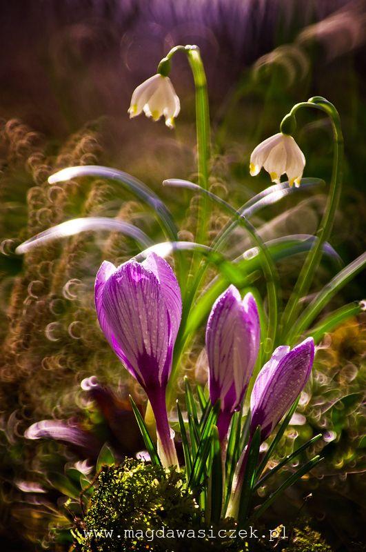 The spring time II by Magda Wasiczek, via 500px