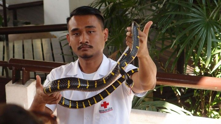 Queen SaovabhaMemorial Institute, or just Snake Farm, is currently ranking as the 29th most important attraction at TripAdvisor. It features a good collection of living snakes, snake venom and snake handling shows and lots of educational information and displays about snakes and their habitat.