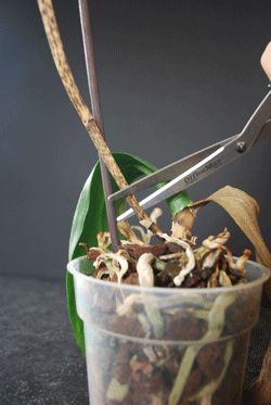I CAN NOT BELIEVE THAT I COULD HAVE SAVED MY TWO ORCHIDS LAST SUMMER !!!!!!!!!!!!!!!!! I could cry =(